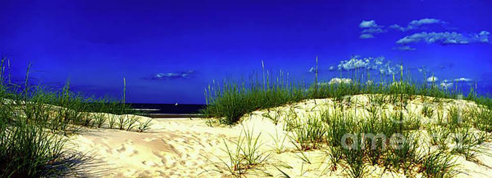 Florida Daytona beach sand dunes by Tom Jelen
