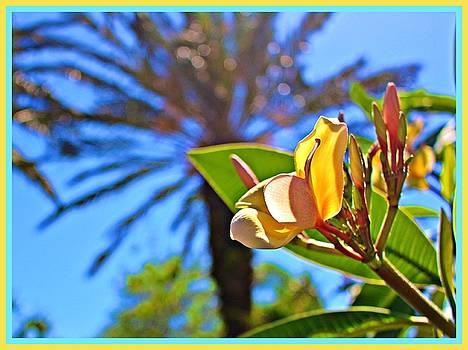 Florida Essence by Mindy Newman