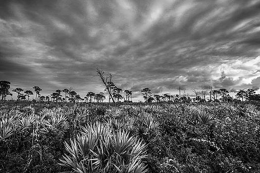 Florida Flatwoods by Christopher Perez