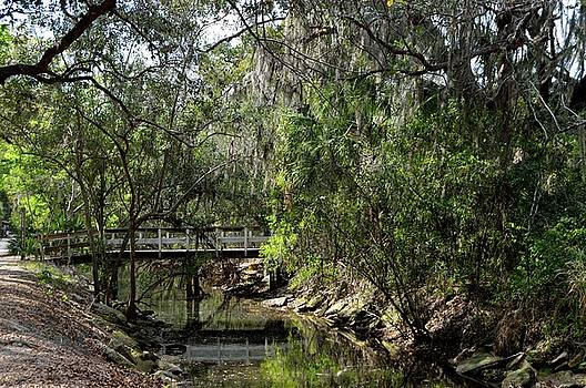 Florida Garden by Sue Houston