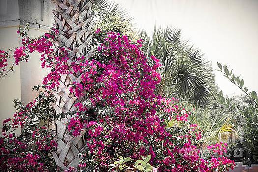 Florida Garden by Todd A Blanchard