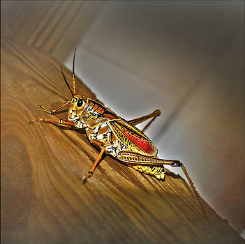 Florida Grasshopper by Judy Hall-Folde