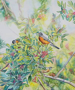 Florida Holly Robins by Gail Dolphin