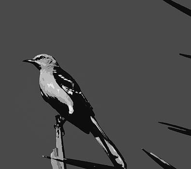 Florida Mockingbird  by Ines  Ganteaume