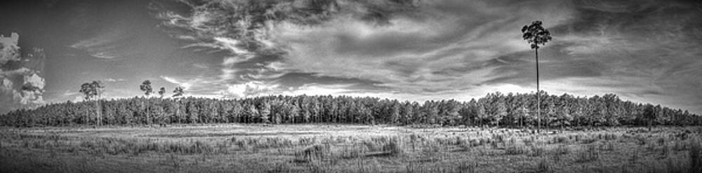 Florida Pasture #1 by Phil Penne