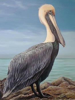 Florida Pelican by Susan Elizabeth Wolding