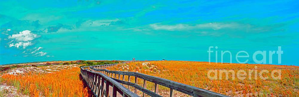 Florida sand dunes Atlantic New Smyrna beach by Tom Jelen