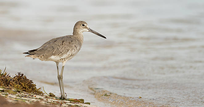 Florida Shore Bird by Martha Lyle