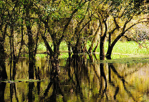 Florida Swamp by Rosalie Scanlon