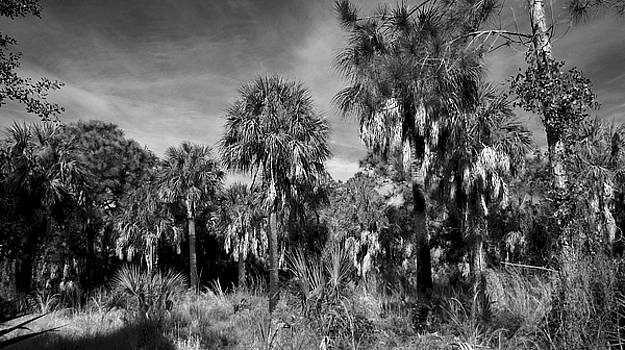Florida's Tree by Phil Penne