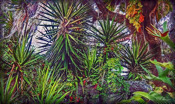 Florida's Vegetation by Hanny Heim