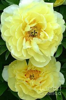 Flourishing by Stephanie  Bland