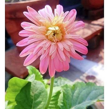 Flower 🌸🌼 #instagood #instalove by Rajesh Yadav