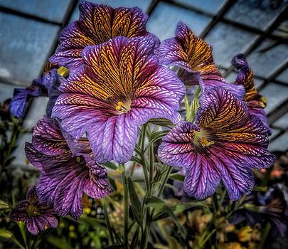 Flower #1 by Fred LeBlanc