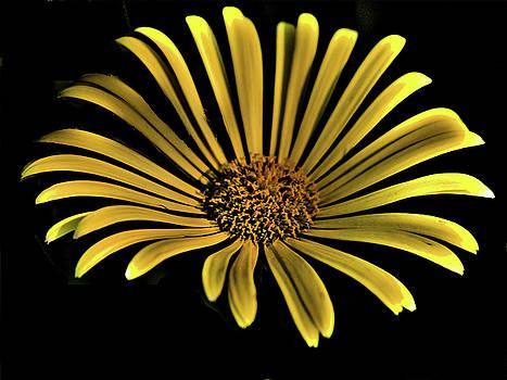 LAWRENCE CHRISTOPHER - FLOWER 1