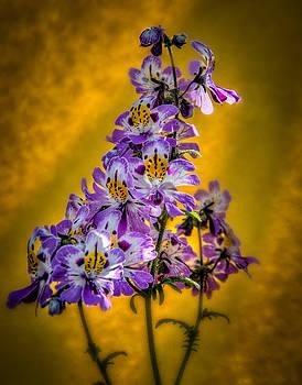 Flower #3 by Fred LeBlanc