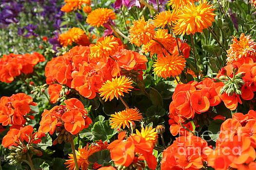 Chuck Kuhn - Flower 6