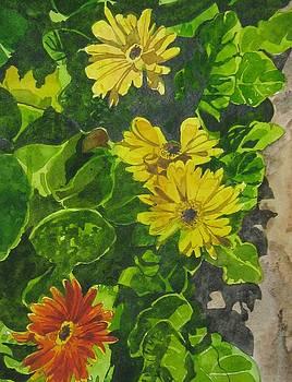 Flower by Akhilkrishna Jayanth