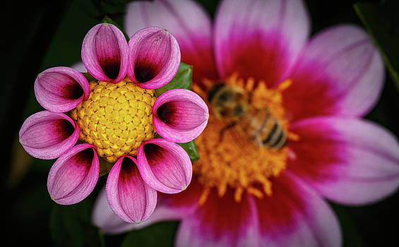 Mike Penney - Flower and Bee