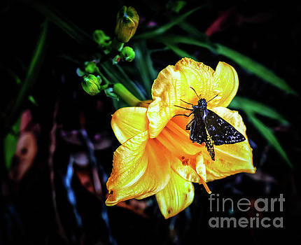 Flower and Butterfly by JB Thomas