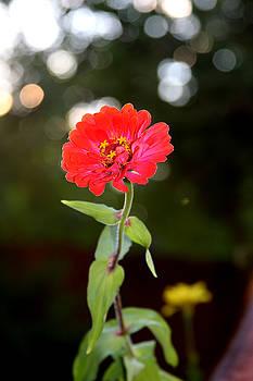 Vadim Levin - Flower and Hope