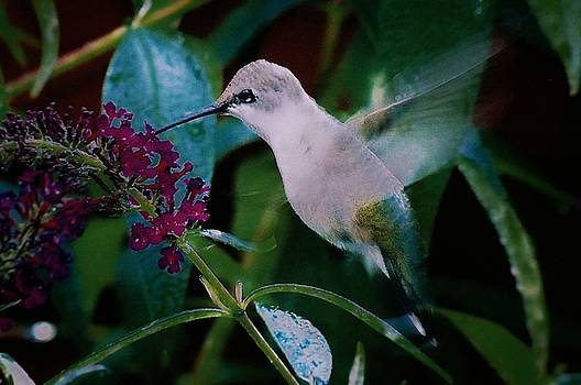 Flower And Hummingbird by Joseph Frank Baraba