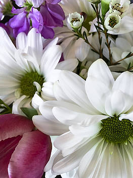 Daisies and Tulips by Andrew Soundarajan
