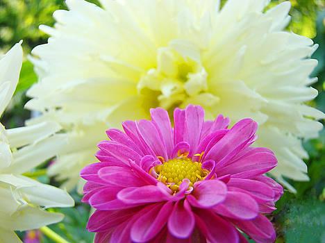 Baslee Troutman - Flower Art Print White Pink Dahlia Floral Canvas Baslee Troutman
