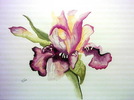 Flower  by Basma Saadeh