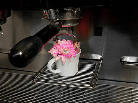 Flower Brew by Rae Tucker