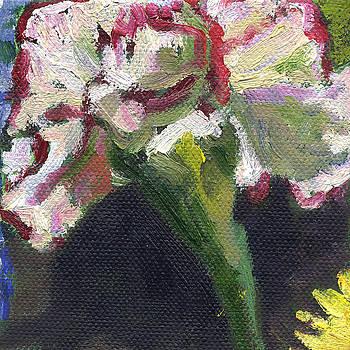 Flower Carnation by Kathleen Barnes