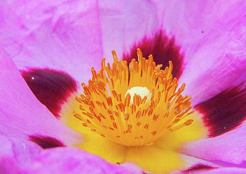 Flower center by Emilia Brasier
