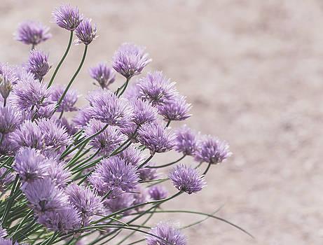 Kim Hojnacki - Flower Chives