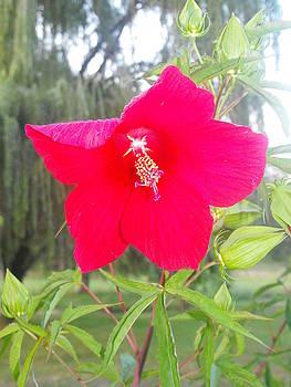 Flower by Christy Bearden