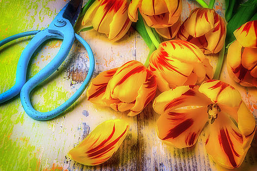 Flower Clippers And Tulips by Garry Gay