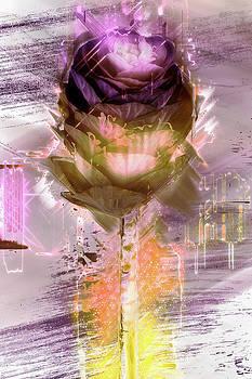Flower color by Jos Verhoeven