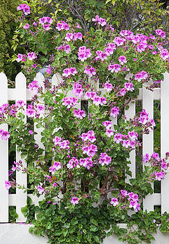 Ramunas Bruzas - Flower Fence