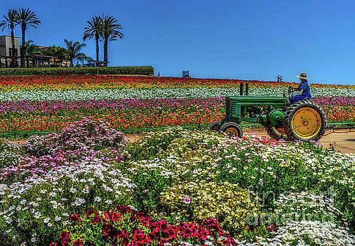 Flower Fields - 0845va by Debra Kewley