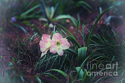 Dale Powell - Flower Garden Blooming