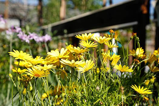 Flower Garden by Raquel Amaral