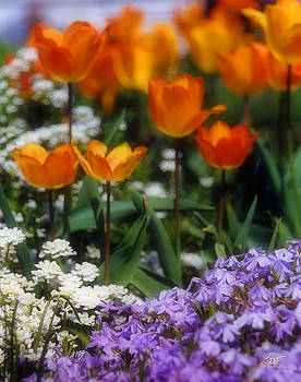 Sam Davis Johnson - Flower Garden