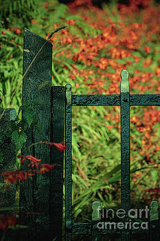 Marc Daly - Flower Gate