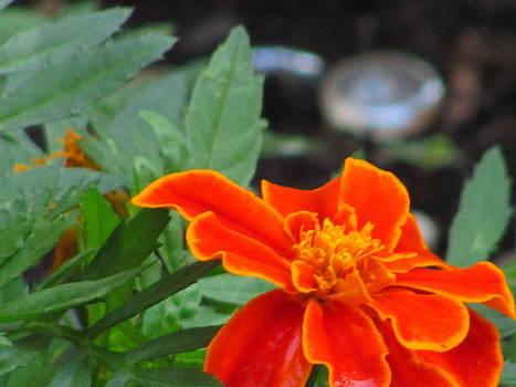 Flower grows in Queens by Lisa Oliver-McNeer