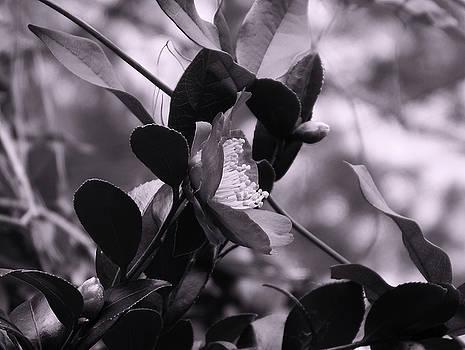Flower in Cyan by Cathy Harper