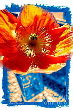 Flower in Moms Garden by Kip Krause