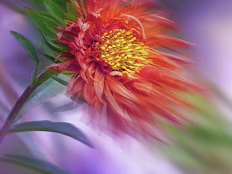 Flower in the Wind by Nina Bradica