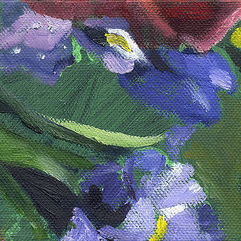 Flower Iris 1 by Kathleen Barnes