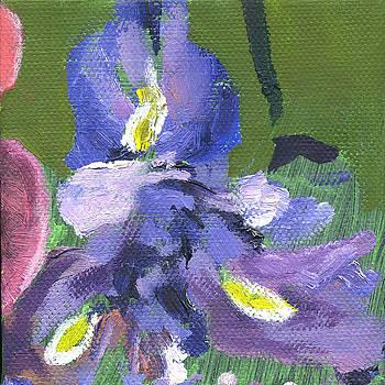 Flower Iris 2 by Kathleen Barnes