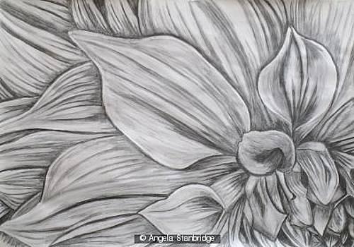 Flower by Isaiah Soergel