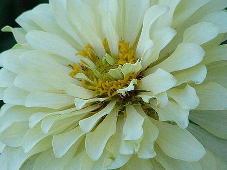 Jerome Holmes - Flower